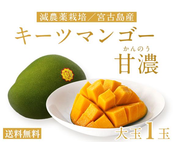 宮古島マンゴー甘濃 特別栽培
